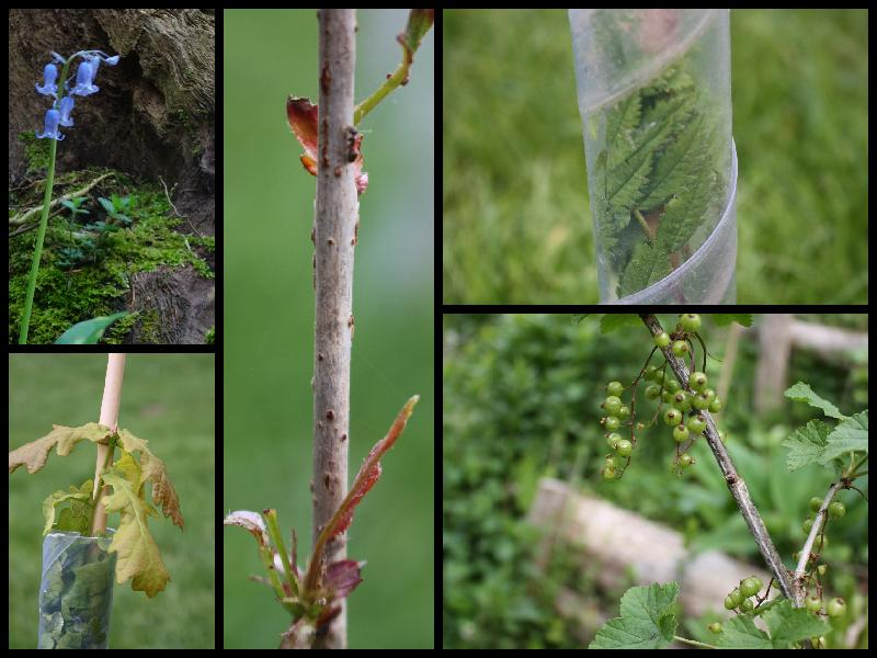 Collage of tree buds and flowers